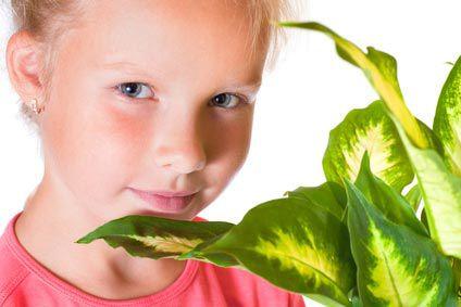 Dans la maison: des plantes toxiques pour bébé !